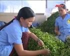 Hợp tác xã bao tiêu sản phẩm cho nông dân