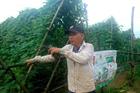 Sau thiên tai, nông dân lo trộm cắp nông sản