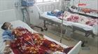 Năm người nhập viện cấp cứu do ăn cá nóc