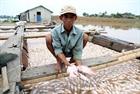 Điều tra nguyên nhân cá bè chết trắng sông La Ngà
