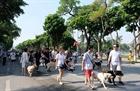 Chó thả rông trên phố đi bộ gây lo ngại