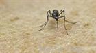 Lần đầu tiên phát hiện ca nhiễm virus Zika do muỗi đốt tại châu Âu