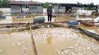 Đồng Nai: Người nuôi cá bè thiệt hại nặng do lũ lụt