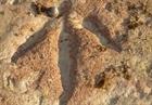 Phát hiện nhiều dấu chân khủng long ở Tây Tạng, Trung Quốc