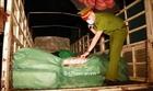 Bắt giữ xe tải chở 1,8 tấn chân gà không rõ nguồn gốc