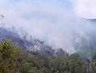Bình Định: đốt vàng mã làm cháy gần 15 ha rừng trồng