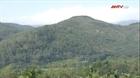 Huyện An Lão bãi bỏ 10 tổ kiểm tra, truy quét rừng