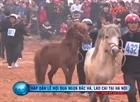 Clip vó ngựa Bắc Hà giữa Hà Nội