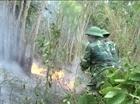 Cận cảnh một dải rừng Phú Yên đỏ lửa