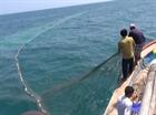 Quảng Ngãi: Chuyến biển đầu năm trúng đậm cá cơm