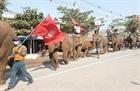 Myanmar: Cưỡi voi tham gia biểu tình