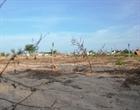 Hàng trăm ha đất ở Lý Sơn bị bỏ hoang giữa mùa xuống giống