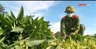 Công an thu hoạch nông sản giúp bà con vùng giãn cách
