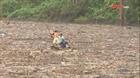 Người dân liều mạng vớt củi trên hồ thủy điện