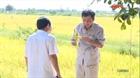 Quảng Trị phát triển mô hình lúa sạch chất lượng cao