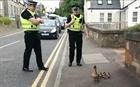 Nhân viên cảnh sát giúp chú mèo sang đường gây sốt mạng xã hội