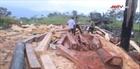 Lâm tặc phá rừng quy mô lớn tại huyện M Đrắk