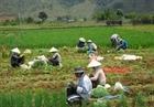 Tăng mức thu nhập cho người dân nông thôn