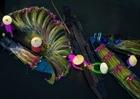 6 bức ảnh về Việt Nam đạt giải thưởng quốc tế Siena 2020