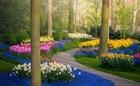 Vườn hoa đẹp nhất thế giới mở cửa trở lại