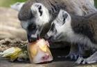 Sở thú Italia phát kem cho động vật