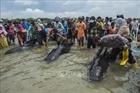 Hàng chục con cá voi chết do mắc cạn tại Indonesia
