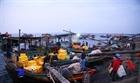 Ngư dân Hà Tĩnh vươn khơi bám biển đầu năm