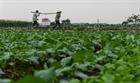 Nông sản Hà Nội không bị vứt bỏ như đồn thổi
