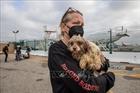 Liên hợp quốc nỗ lực ngăn chặn bệnh dịch lây từ động vật sang người
