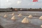 Đã thu mua tạm trữ được gần 10.000 tấn muối