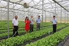 Định hướng chính sách phát triển nông nghiệp hữu cơ