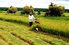 5 năm thực hiện đề án tái cơ cấu nông nghiệp