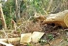 Phát hiện thêm 1 vụ phá rừng ở huyện Ea Kar
