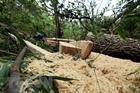 Trách nhiệm quản lý khi rừng liên tục bị phá?