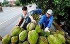 Xuất khẩu nông sản Việt trước quy định mới của Trung Quốc