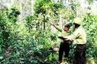 Khánh Hòa chủ động phòng cháy chữa cháy rừng mùa khô