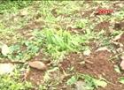 Khẩn trương khắc phục thiệt hại do lốc xoáy ở Hà Giang
