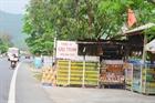 Phát triển thương hiệu dầu tràm Lộc Thủy