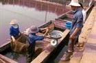 Gia tăng lượng giống thả xuống biển Khánh Hòa