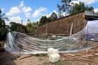 7 bệnh nhân ngạt khí biogas đã vượt qua nguy kịch