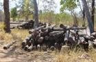 Thủ tướng yêu cầu Đắk Lắk kiểm điểm các vụ khai thác gỗ trái phép