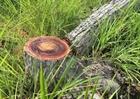 Đề nghị công an điều tra vụ phá rừng tự nhiên tại Bình Định