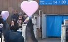 Valentine sớm tại công viên thủy sinh Nhật Bản