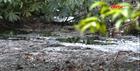 Làng ven đô sống trong cảnh ô nhiễm nguồn nước trầm trọng