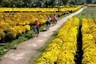 Đánh thức tiềm năng kinh tế du lịch làng hoa Mê Linh