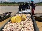 Xác định nguyên nhân cá chết trên sông La Ngà