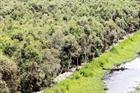 Ngăn chặn xâm nhập trái phép Vườn quốc gia Mũi Cà Mau