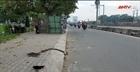 Bị cướp giật túi xách, 2 vợ chồng ngã xe nhập viện