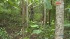 Yêu rừng - rừng cho