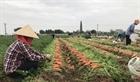 Tạo điều kiện thuận lợi để nông dân vùng dịch tiêu thu nông sản